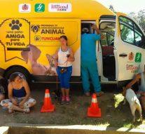 Campaña de esterilización  de perras y gatas