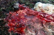 Un toro de 10 millones de pesos fue presa del carneo en finca de Timaná