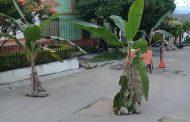 Con matas de plátano, habitantes de El Pital protestan por mal estado de sus calles