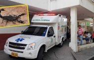 Mujer de 72 años murió al ser picada por un escorpión en zona rural de Garzón