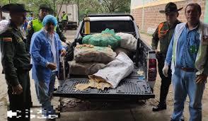 Gran cantidad de pescado en descomposición fue incautada en Pitalito